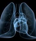 pulmon2