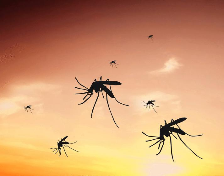 Desaconsejan el uso de ciertos repelentes de mosquitos en menores de 2 años