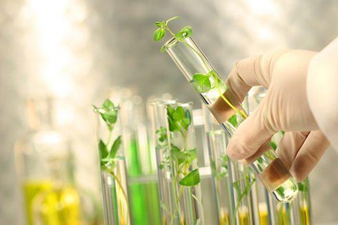Trastornos digestivos y nerviosos, usos más comunes de las plantas medicinales