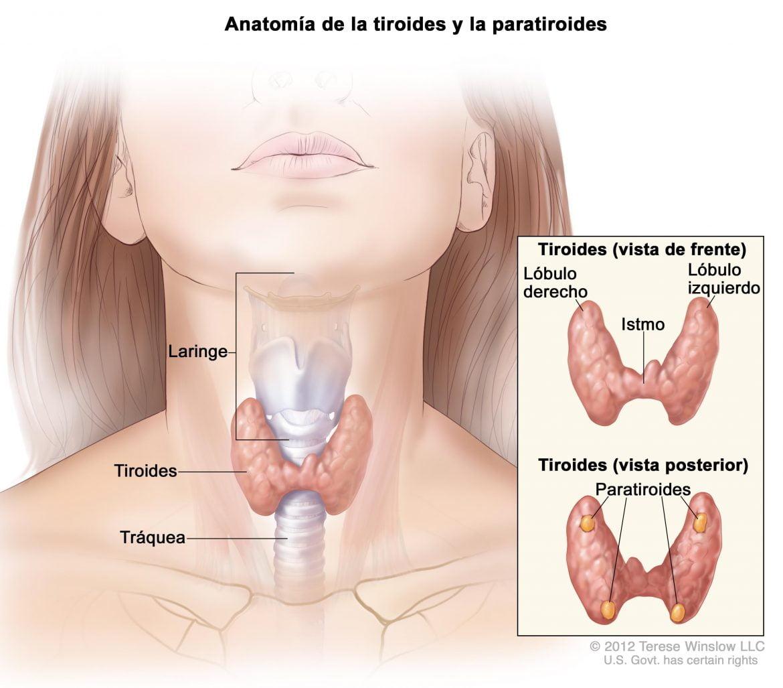 La cirugía salva al 85% de los pacientes con cáncer de tiroides