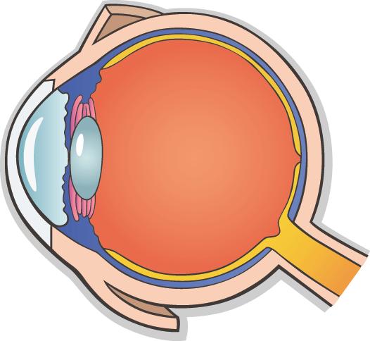 Detectar precozmente las enfermedades de retina, clave para evitar la ceguera