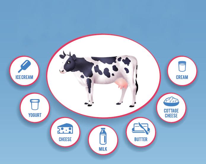 etiquetado intolerancia a la lactosa