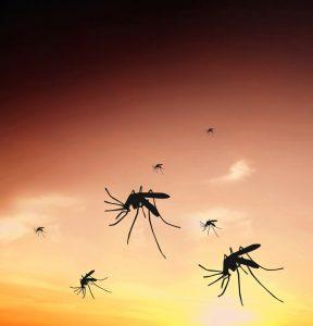 zika, dengue y chikunguña