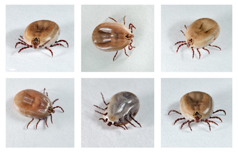 Medidas para la desalergenización de ácaros y hongos en el hogar