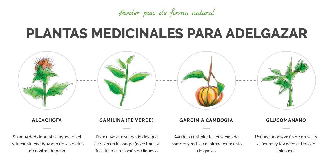 Las plantas medicinales ayudan a perder peso de forma gradual y sostenible