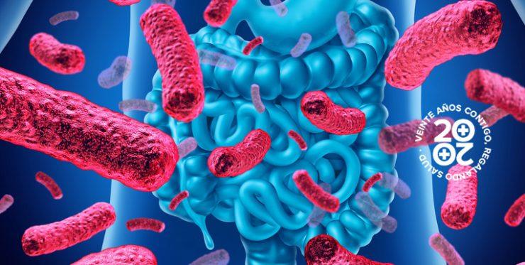 Microbiota insuficiencia cardíaca