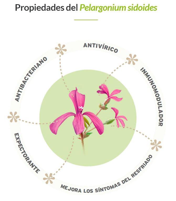 Pelargonium sidoidescombate de forma efectiva el resfriado