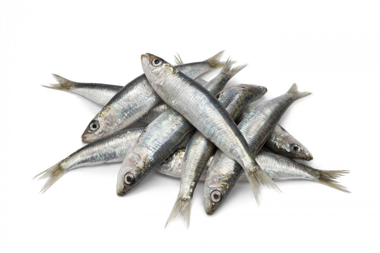 El pescado: sus beneficios