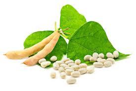 Los suplementos de soja alteran genes asociados al cáncer de mama