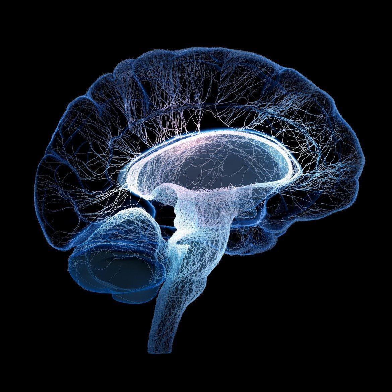 La atrofia cerebral, clave en el diagnóstico de la esclerosis múltiple