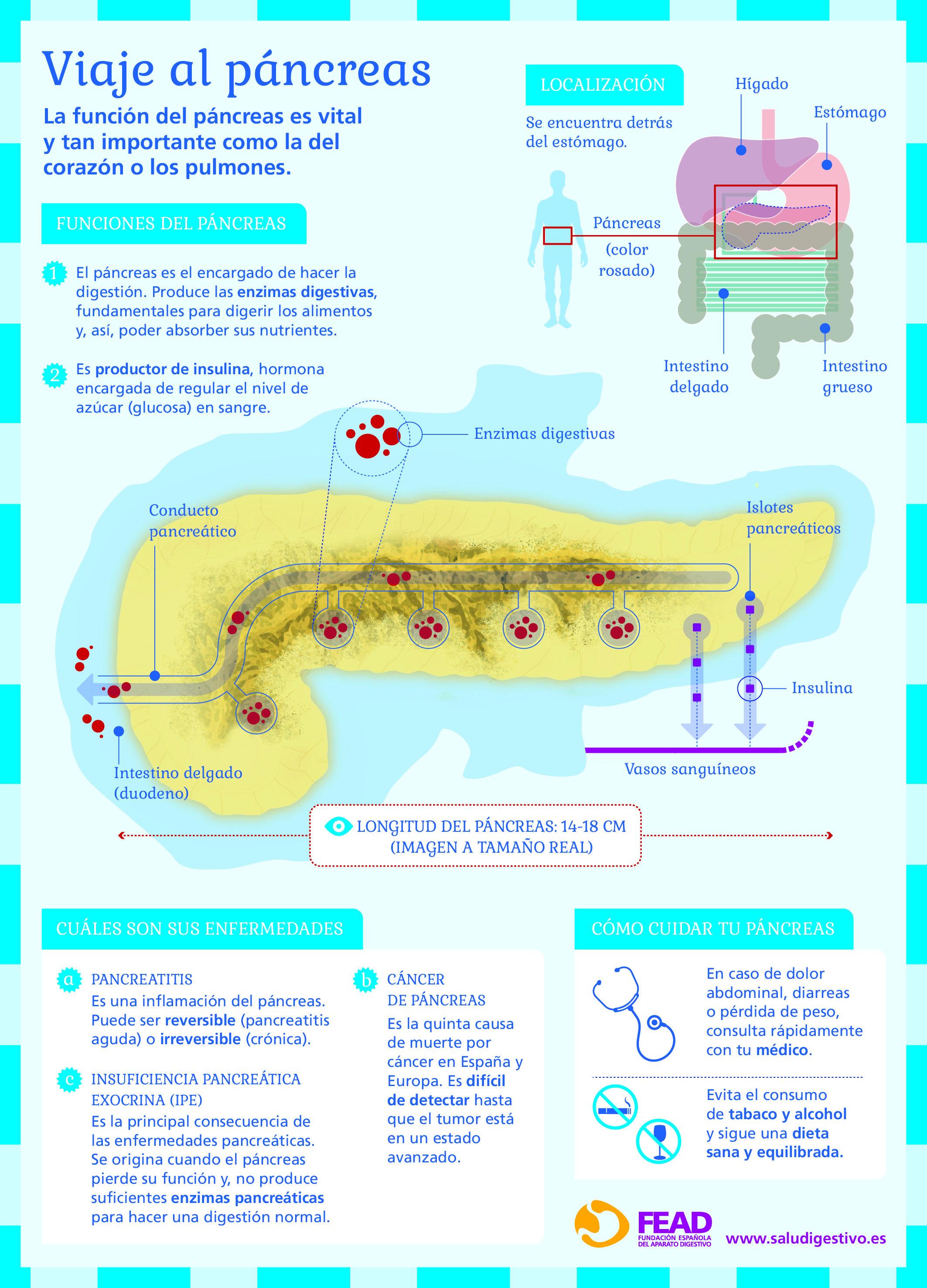 infografia_viaje_al_pancreas