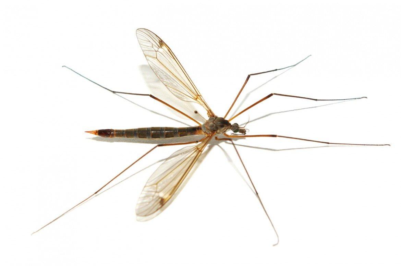 La genética, responsable en un 85% de que nos piquen los mosquitos