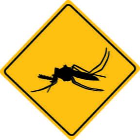 Siete personas infectadas por el zika en España, entre ellas una mujer embarazada
