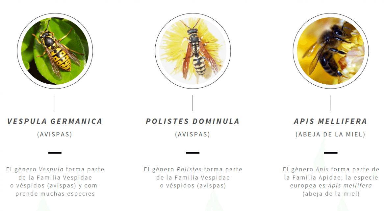 Los alergólogos alertan a personas de riesgo: las picaduras de himenópteros se disparan en verano