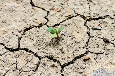 ¿Tiene solución el cambio climático?