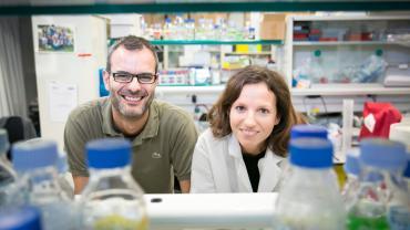 Un estudio español demuestra cómo las células necesitan grasa para hacer metástasis